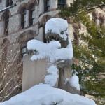 Tijger onder de sneeuw